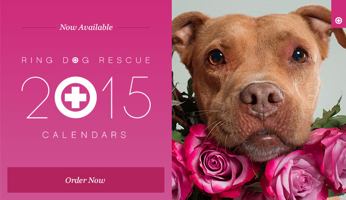 Order your Ring Dog Rescue calendar.